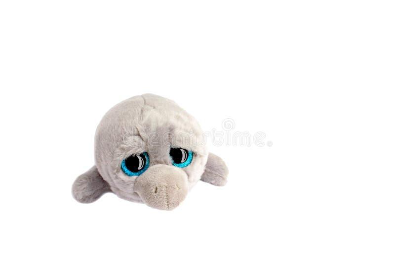 Дельфин серой игрушки мягкий с большими чернотой и голубыми глазами с  стоковые фотографии rf
