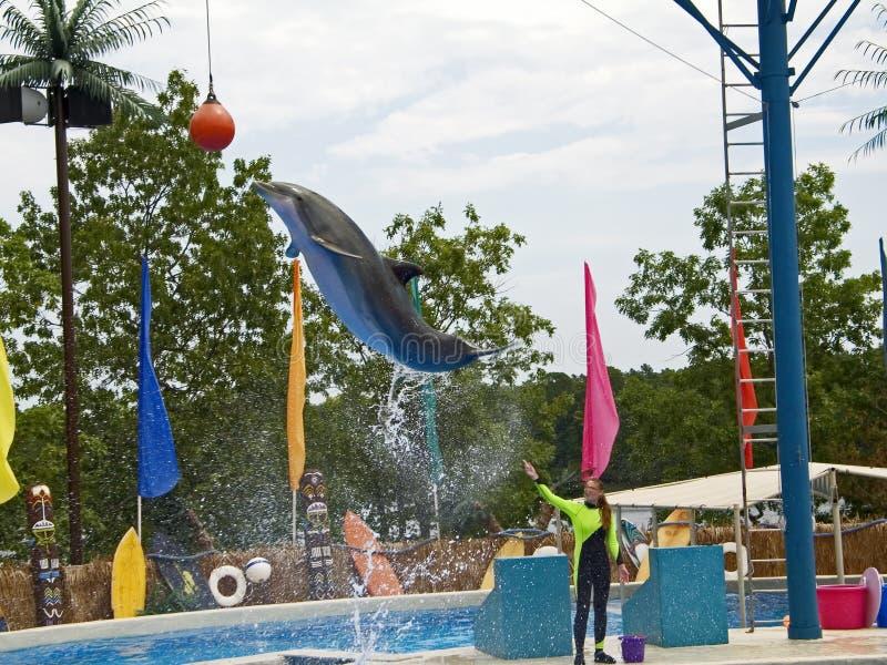 дельфин скачет стоковая фотография rf