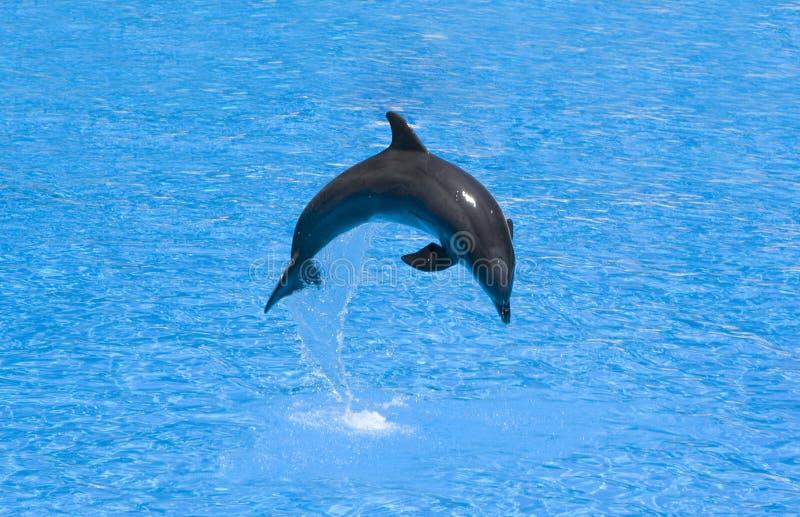 дельфин скачет стоковые фото