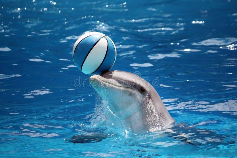 Дельфин с шариком стоковое фото