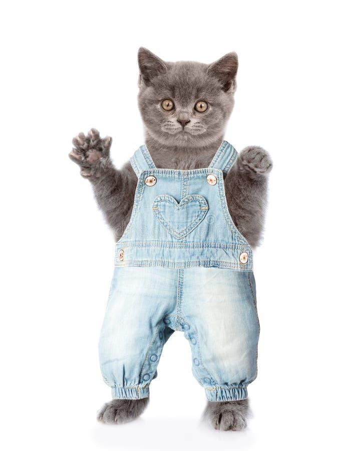 Денежный мешок в прозодеждах джинсов r стоковое изображение