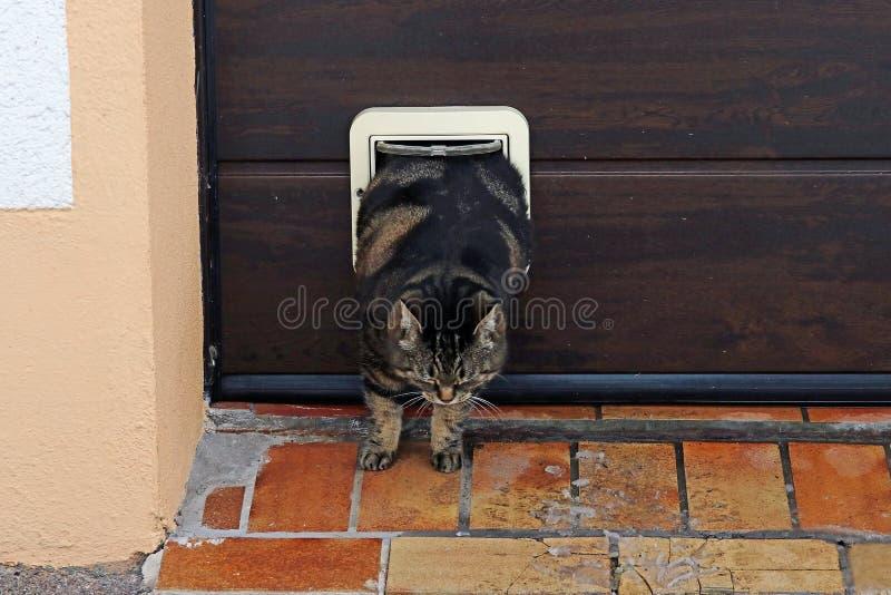 Денежный мешок сжимает через щиток кота стоковые фото