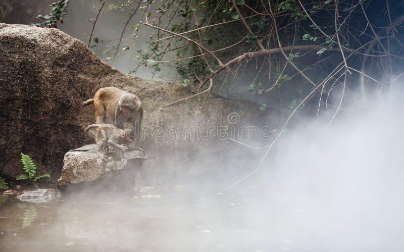 Деньги в тумане стоковое изображение rf