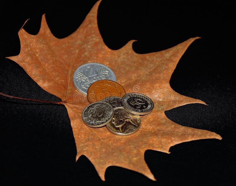 Деньги на листьях стоковое изображение rf