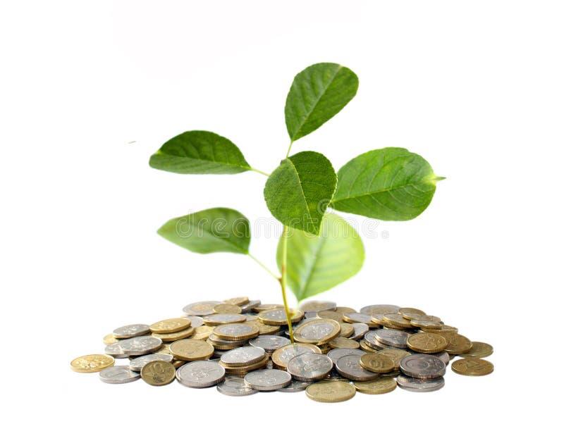 деньги принципиальной схемы растущие стоковая фотография rf