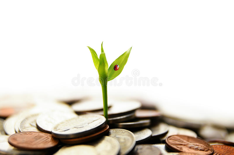 деньги роста новые стоковые фото