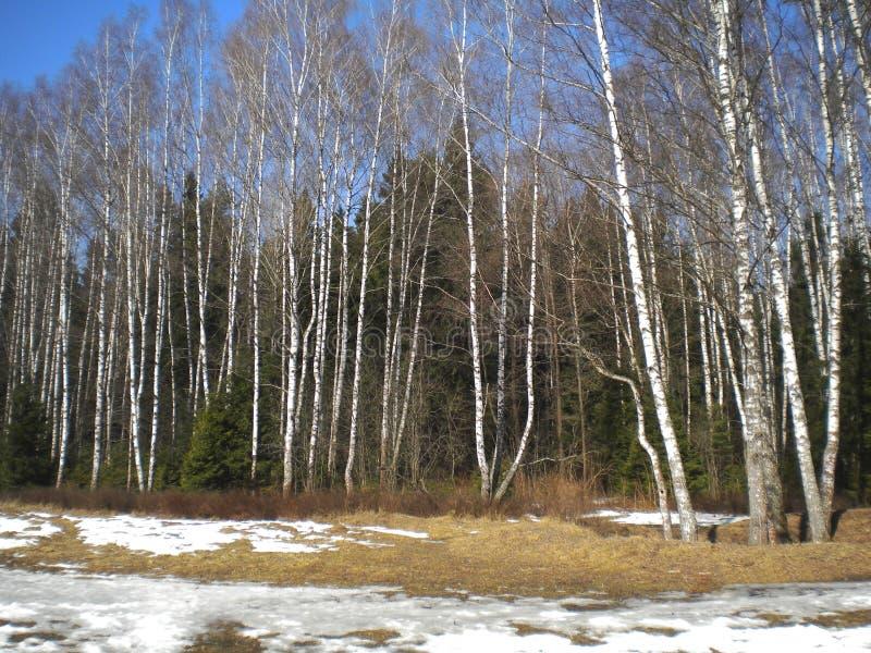 День весны ясный теплый в древесинах стоковое фото rf