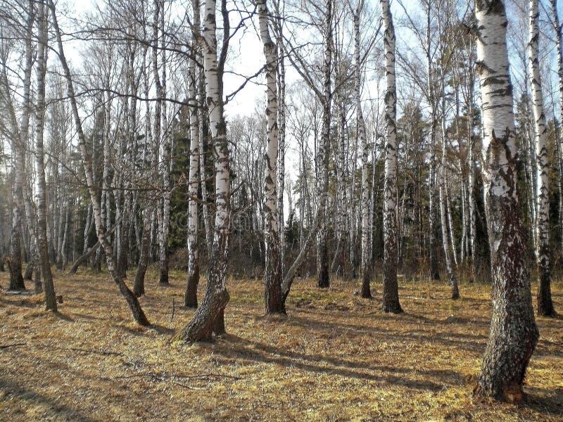День весны ясный теплый в древесинах стоковые фотографии rf