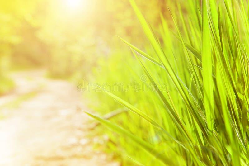День весны солнечный стоковое изображение rf