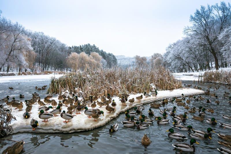 День зимы красивый в парке около замороженного озера с стоковое фото rf