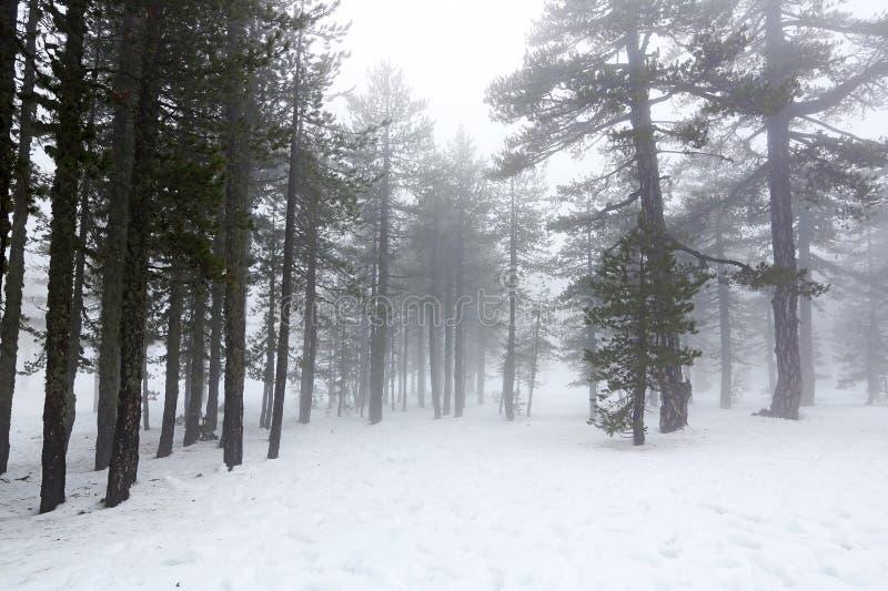 День зимы туманный стоковое фото rf