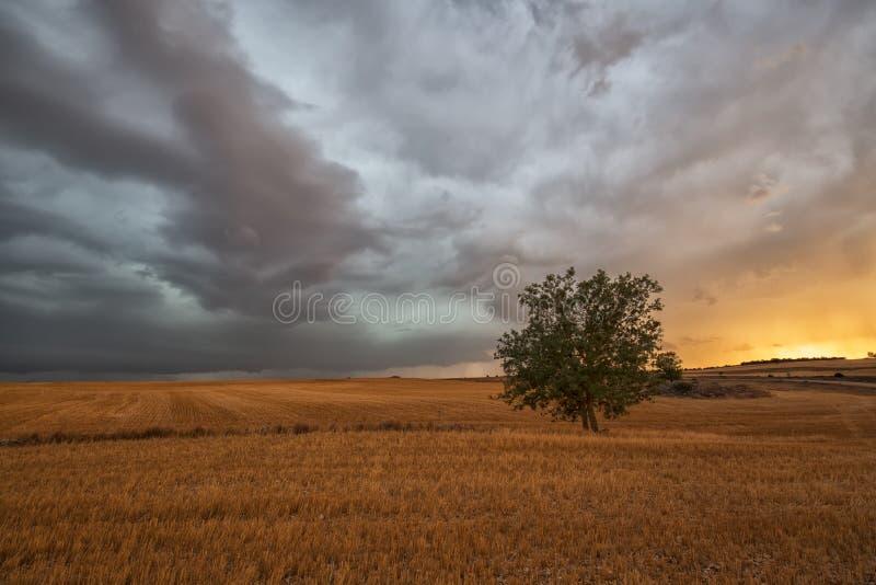 День лета бурный в поле хлопьев стоковая фотография