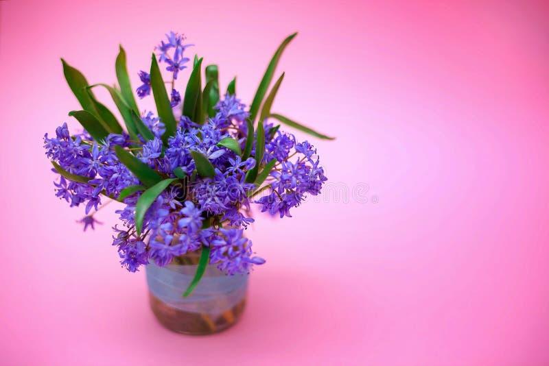 День матери Пасха Красивые голубые весенние цветы в вазе на розовом фоне, закрытые поздравительная открытка 8 марта Международный стоковая фотография