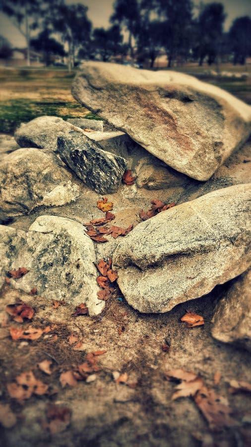 День на парке стоковое изображение rf