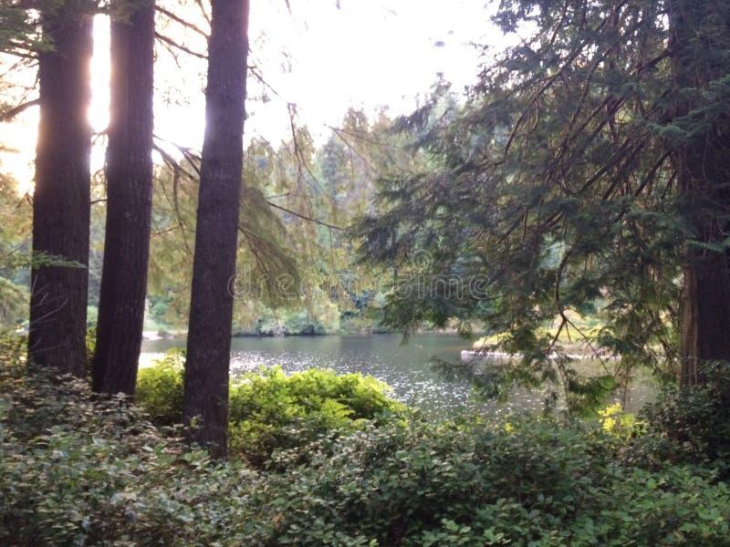 День озера стоковое фото rf