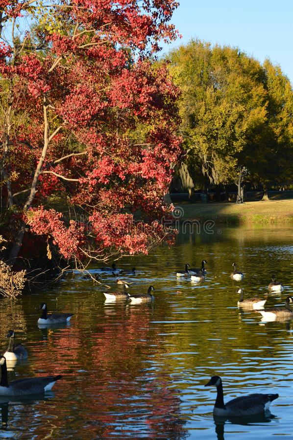 День осени в парке стоковые изображения