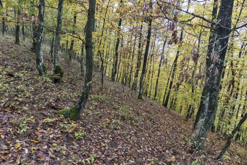 День осени в древесинах стоковое фото