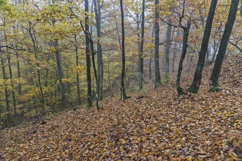 День осени в древесинах стоковое фото rf