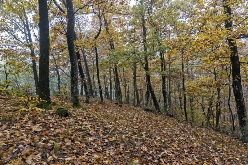 День осени в древесинах стоковые фотографии rf