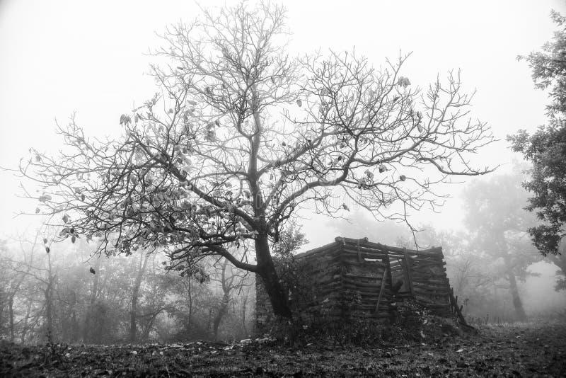 День осени в древесинах стоковая фотография
