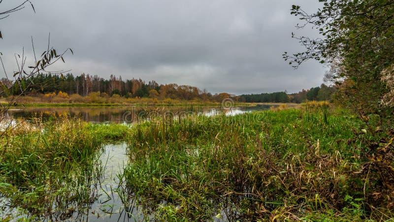 День осени Overcast взгляд от болотистого берега через тростники к реке стоковое фото rf