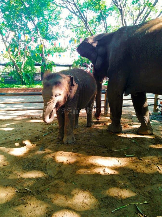 День слонов счастливый стоковые изображения rf