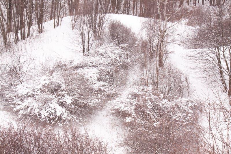 День снега зимы Москвы России в парке города стоковые фотографии rf