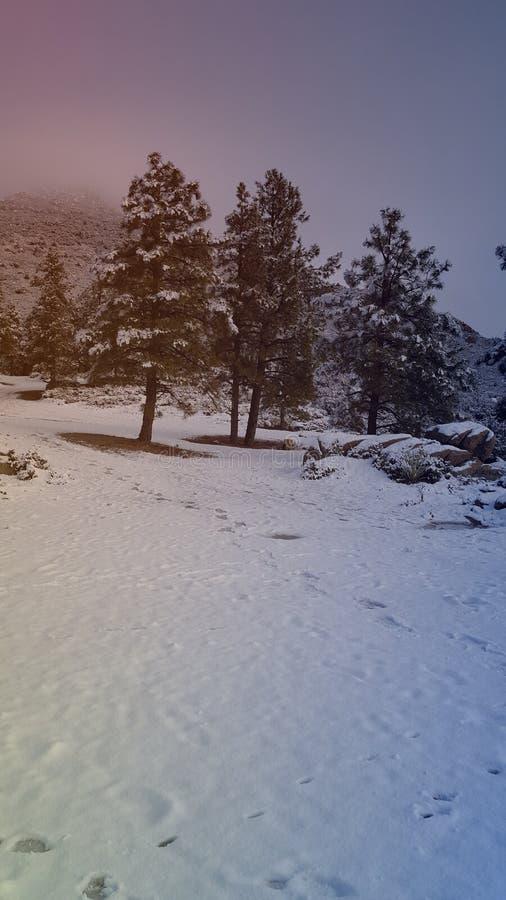 День снега потехи в стране чудес зимы стоковая фотография rf