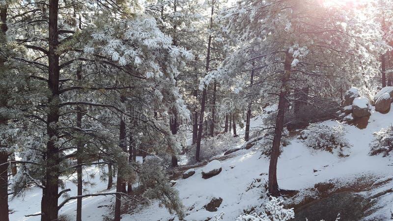 День снега потехи в стране чудес зимы стоковое фото rf