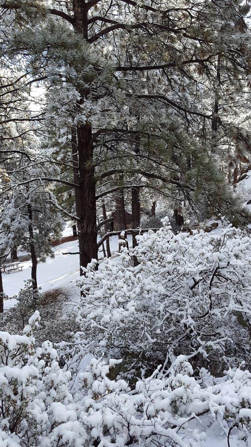 День снега потехи в стране чудес зимы стоковые изображения