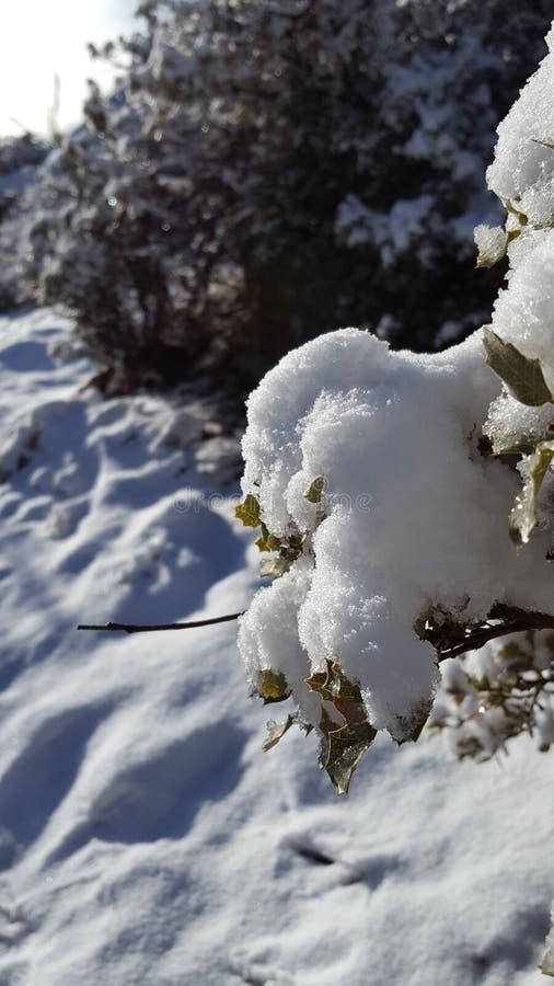 День снега потехи в стране чудес зимы стоковые фото