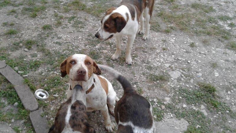 День собак стоковая фотография