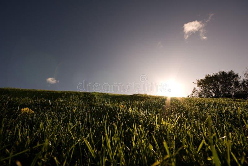 Download день солнечный стоковое изображение. изображение насчитывающей green - 6854129