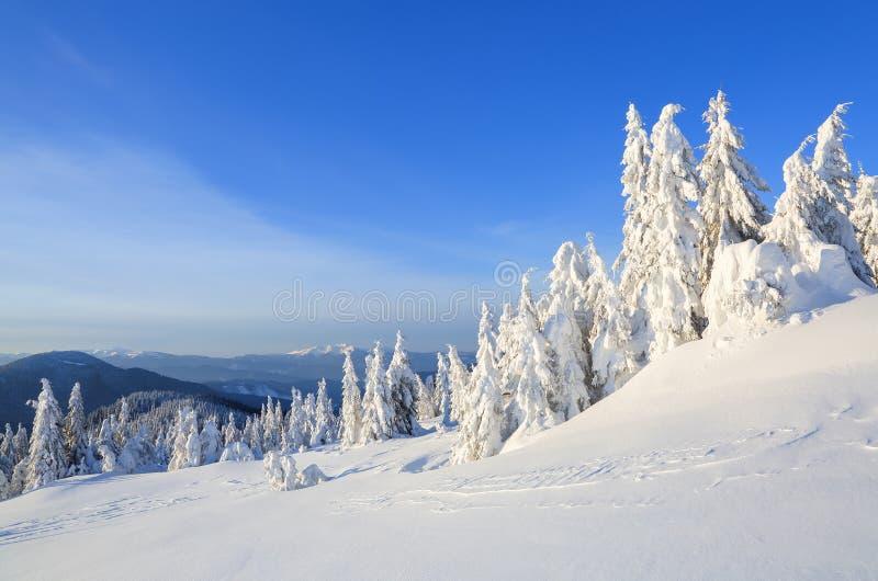 День холодной зимы солнечный Загадочный, секретный, фантастический, мир гор На лужайке покрытой со снегом славные деревья стоковое фото rf