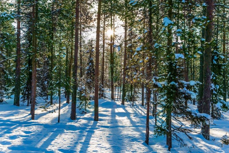 День яркой зимы морозный Лапландия стоковое фото rf