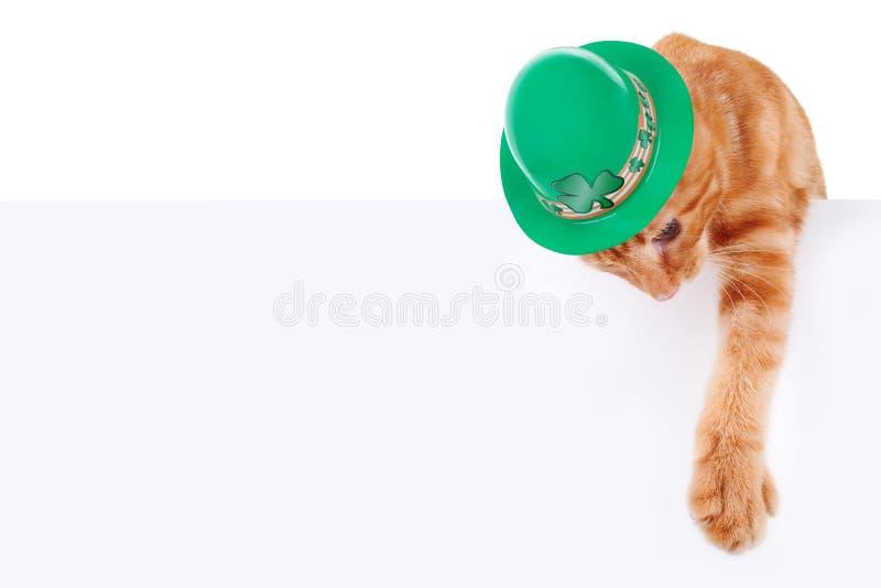 День St. Patrick стоковые фотографии rf