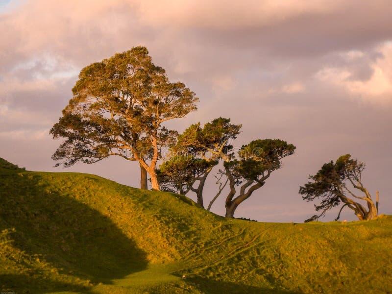 4 дерева на холме стоковое фото