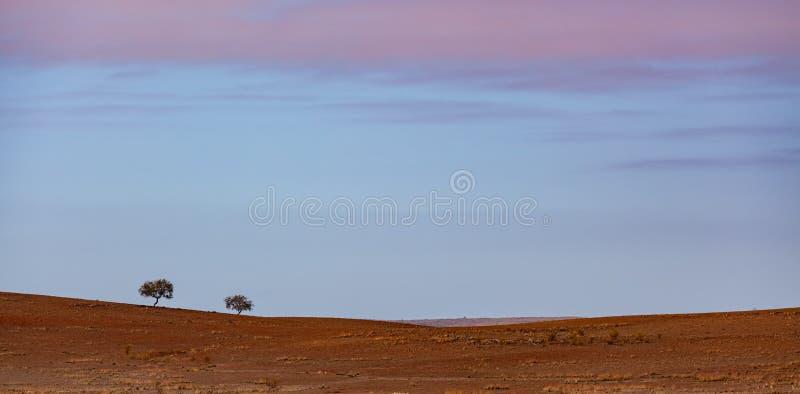 2 дерева растя в красной непроизводительной земле грязи стоковое фото rf