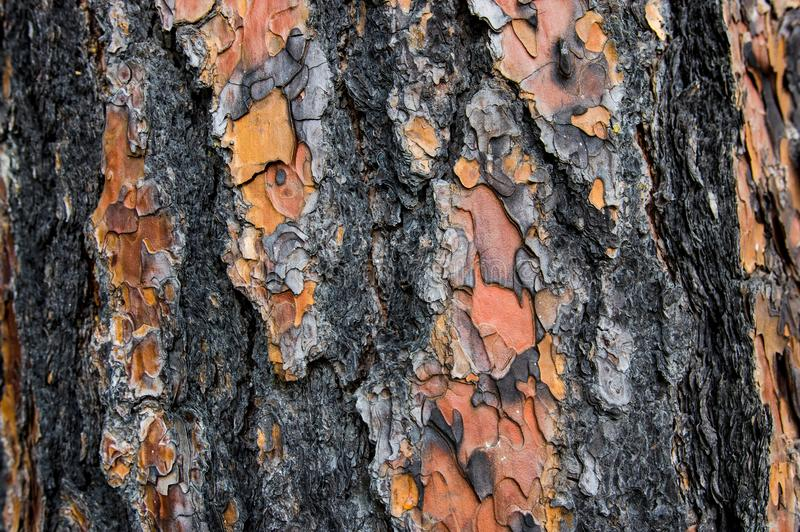 Деревенская старая предпосылка коры дерева с сериями детали стоковое фото