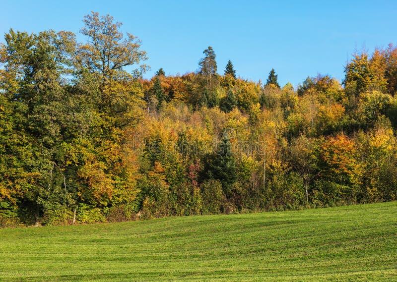 Деревенский вид в осени стоковое фото