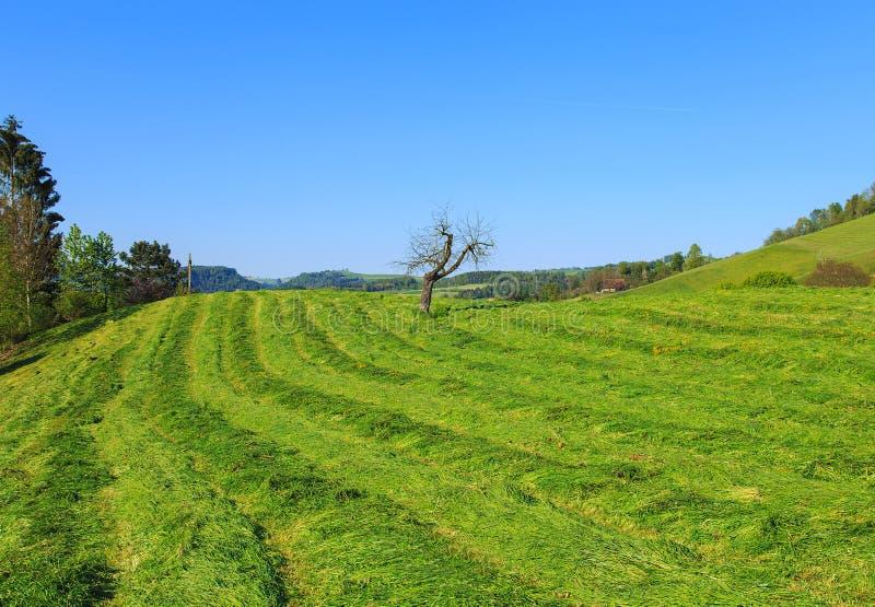 Деревенский вид в Швейцарии в весеннем времени стоковое изображение rf