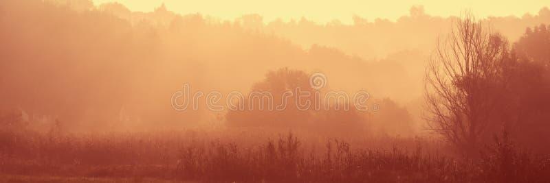 Деревенский луг в тумане осени в предыдущем солнечном утре стоковое изображение rf