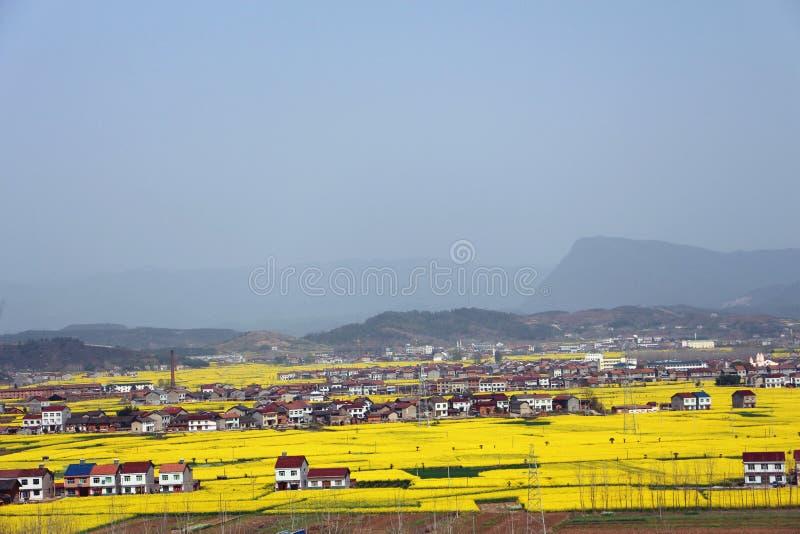 Деревня цветка рапса стоковые изображения