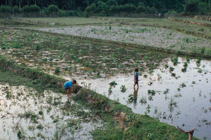 Деревня Muang Ngoi Neua, провинция Louangphrabang, Лаос - 2-ое июня 2017: Мальчики в деревне Muang Ngoi Neua попробовали уловить  стоковая фотография