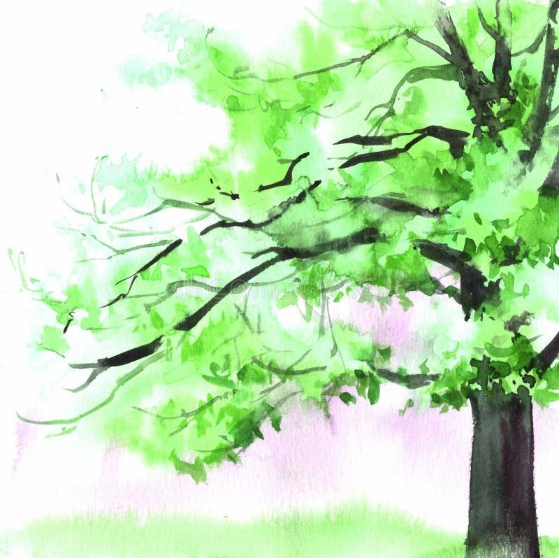 Дерево акварели красивое зеленое Иллюстрация руки вычерченная для карты, открытки, крышки, приглашения, ткани стоковые фотографии rf