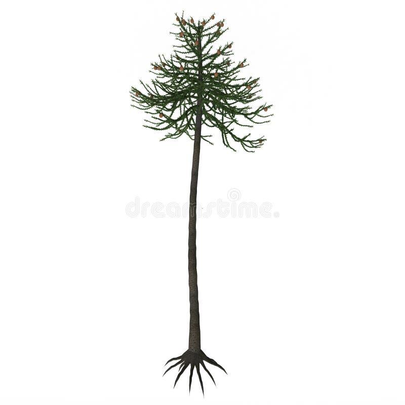 Дерево араукарии иллюстрация штока