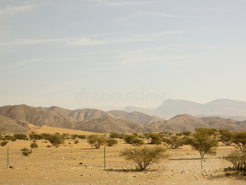 Дерево ладана в вадях Dawkah стоковые изображения rf