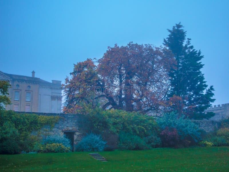 Дерево Алисы в истории страны чудес стоковая фотография rf