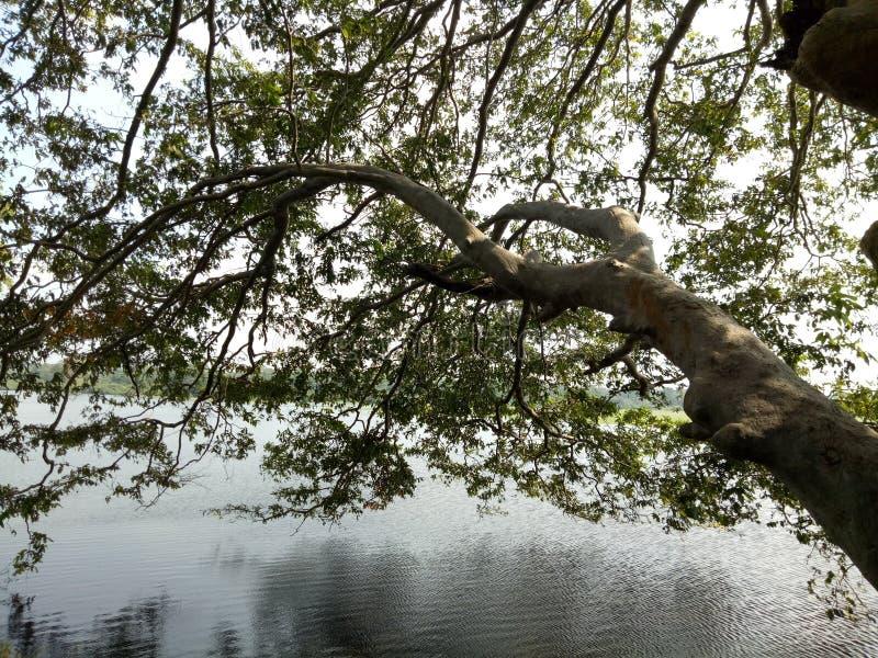 дерево бассейна стоковое изображение rf