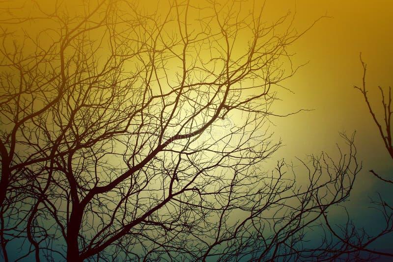 Дерево без листьев сформировано от естественного света и тени этих ветвей стоковое фото rf